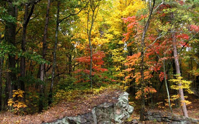 Fall at John Wilson Park