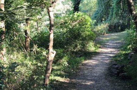 """Far Enough"" Trail"