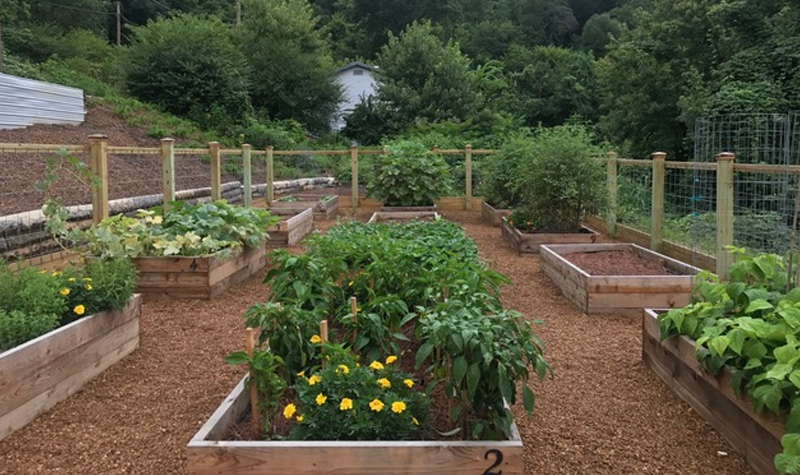 A picture of the garden in the early growing season