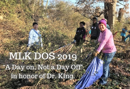 MLK DOS volunteers pulling a tarp of brush from last year