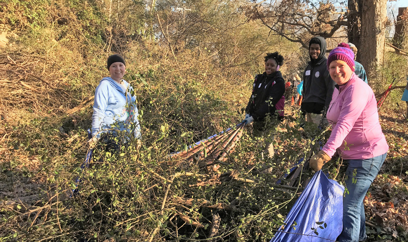MLK day of service volunteers and interns working together to drag a tarp filled with brush that has been cut