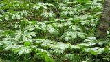raoul-glascock-plants