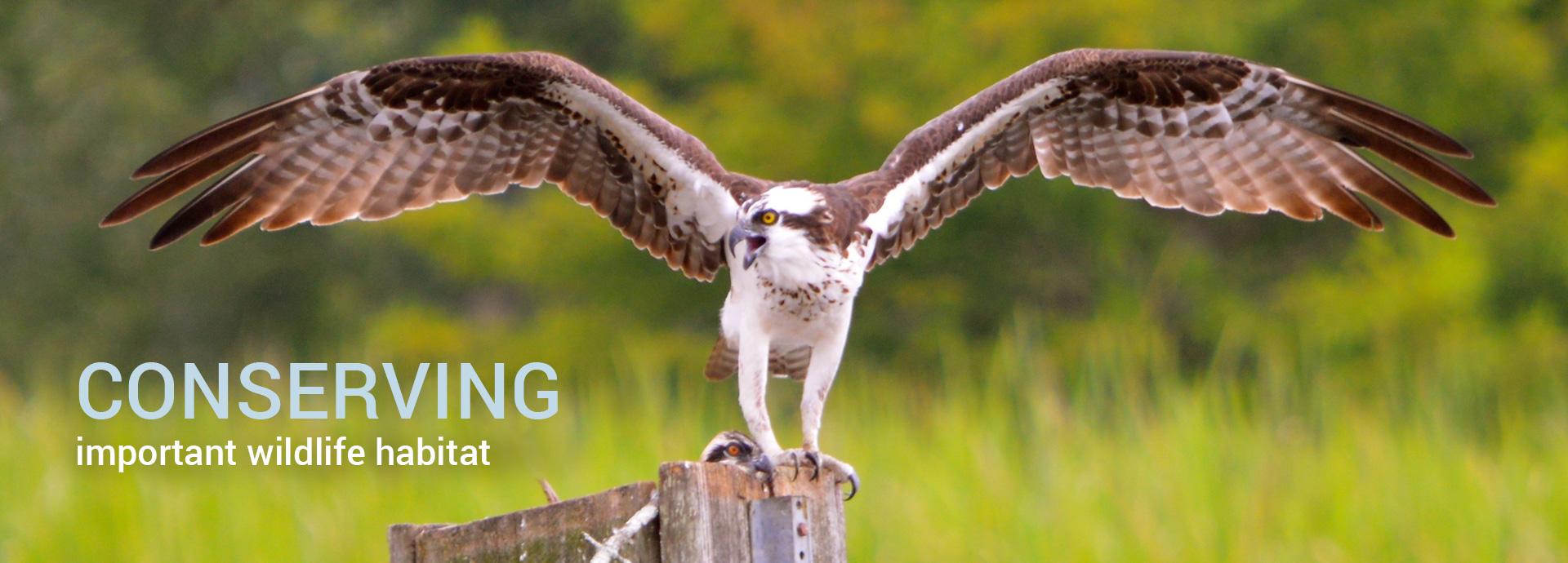 conserving important wildlife habitat