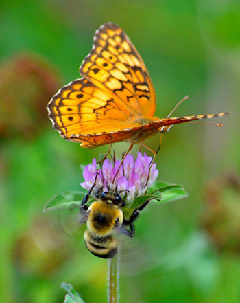 flower, bee and butterfly